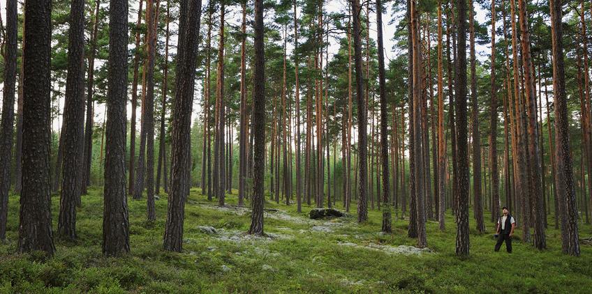 Köpa skog sverige